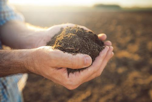Why Dirt Doesn't Hurt – It Makes Us Stronger