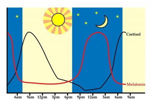 Optimizing the Sleep-Wake Cycle